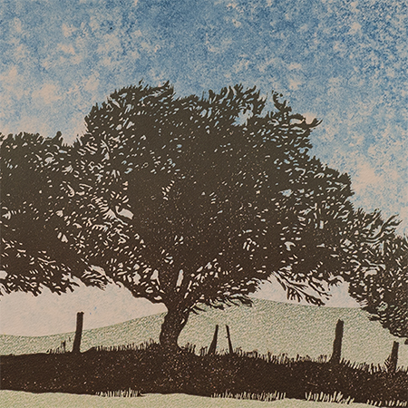 Dartmoor Hedgerow #1 (prints)
