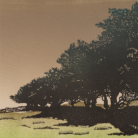 Dartmoor Hedgerow #2 (prints)