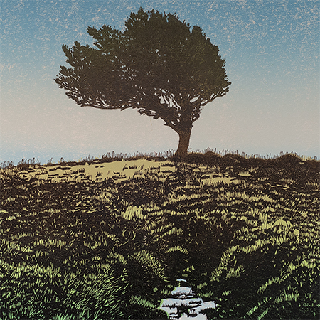 Holly Tree - Dartmoor (prints)